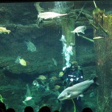 The diver tells about each fish as she feeds it.