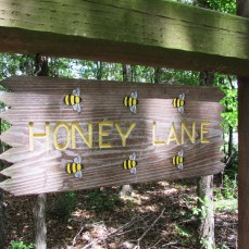 Honey Lane has a great little building in the woods where you learn all about bees.
