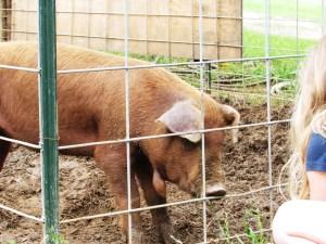 Bad Wattle Pig!