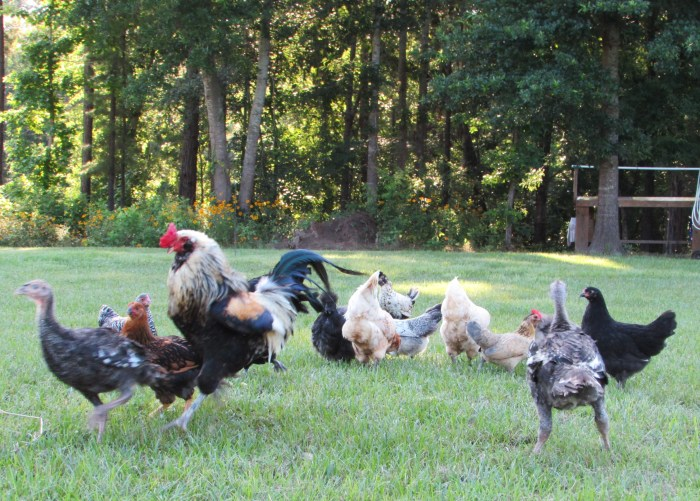 The turkeys thought they were invited.  They weren't.  Randy asked them, rather unkindly, to leave.