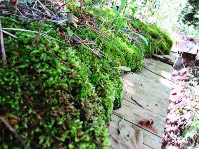 Moss on the bridge.