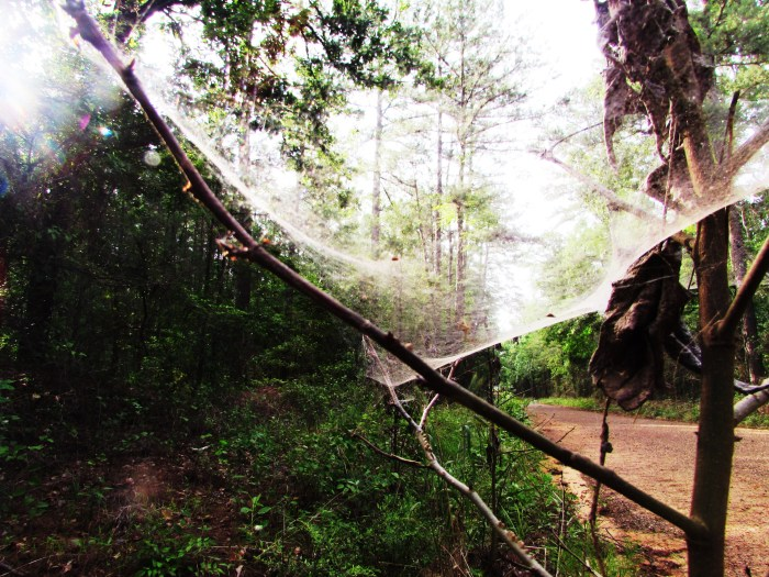 The forest viewed through the web.