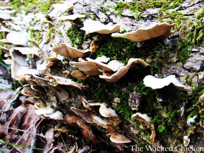 fungi walk