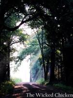 road walk