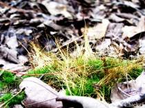 walk moss