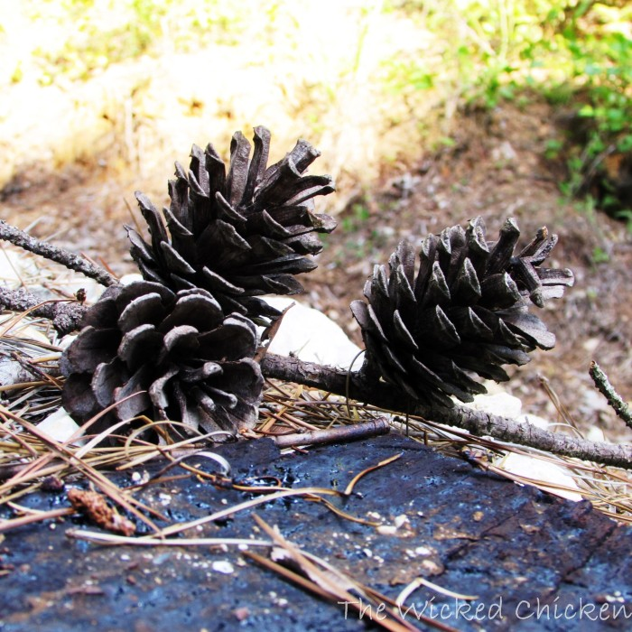 walk pinecone