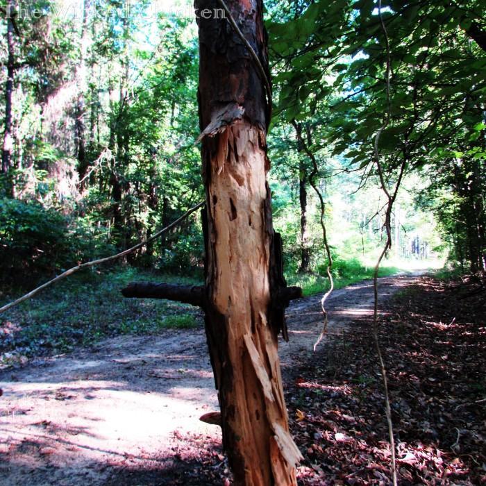 walk woods