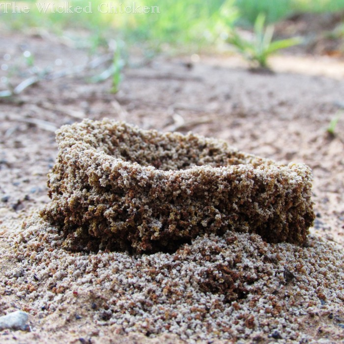 walk ant hill