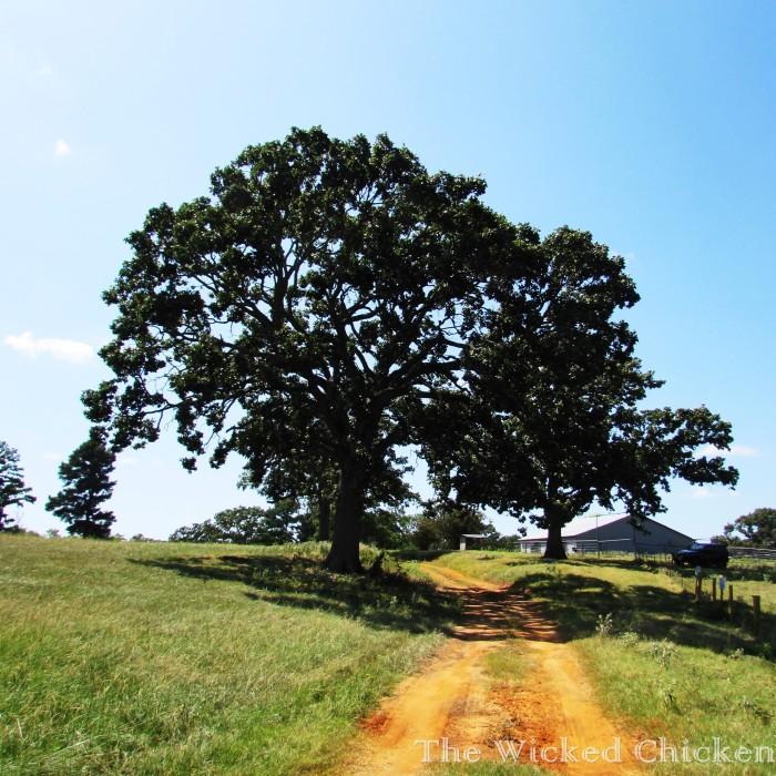 pawpaw's walk