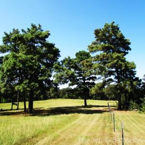 trees walk