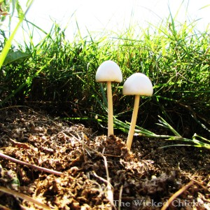 mushrooms walk