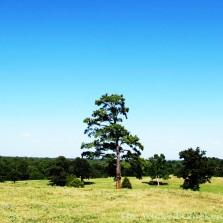 pine tree walk