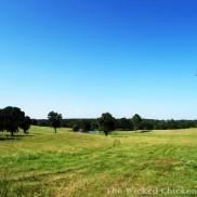 pasture walk