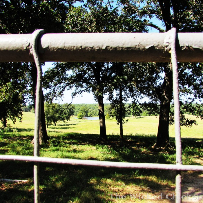 gate pasture walk