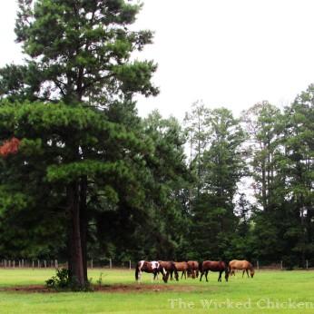 horses walk