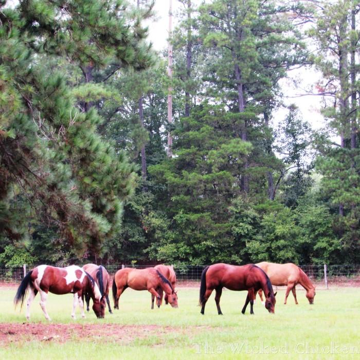 walk horses