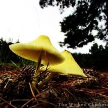 walk mushroom