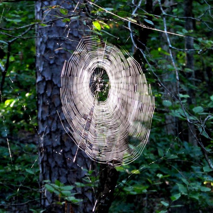 walk web