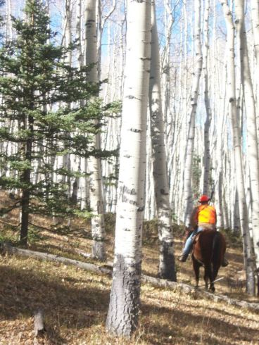 Riding thru the aspens.