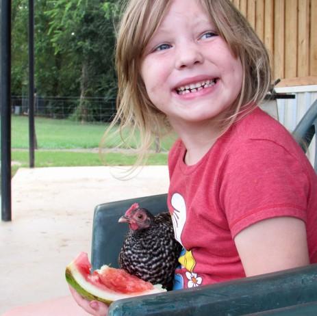 chicken Addie