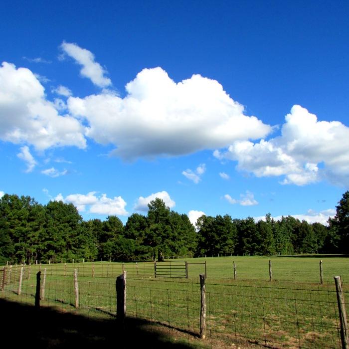 walk pasture