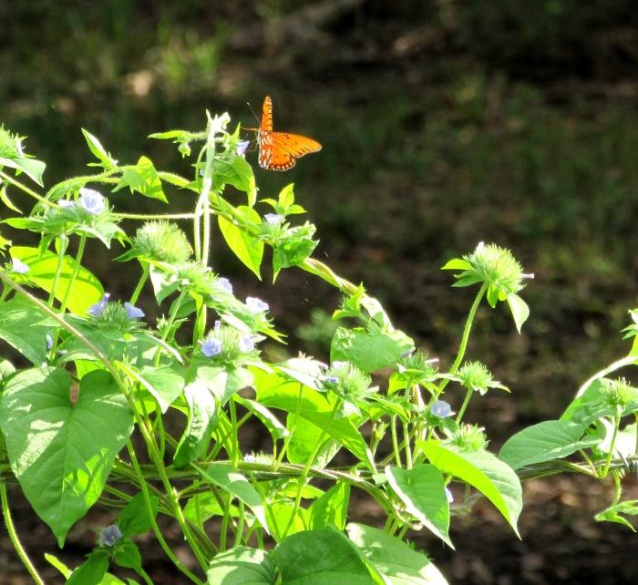walk butterfly