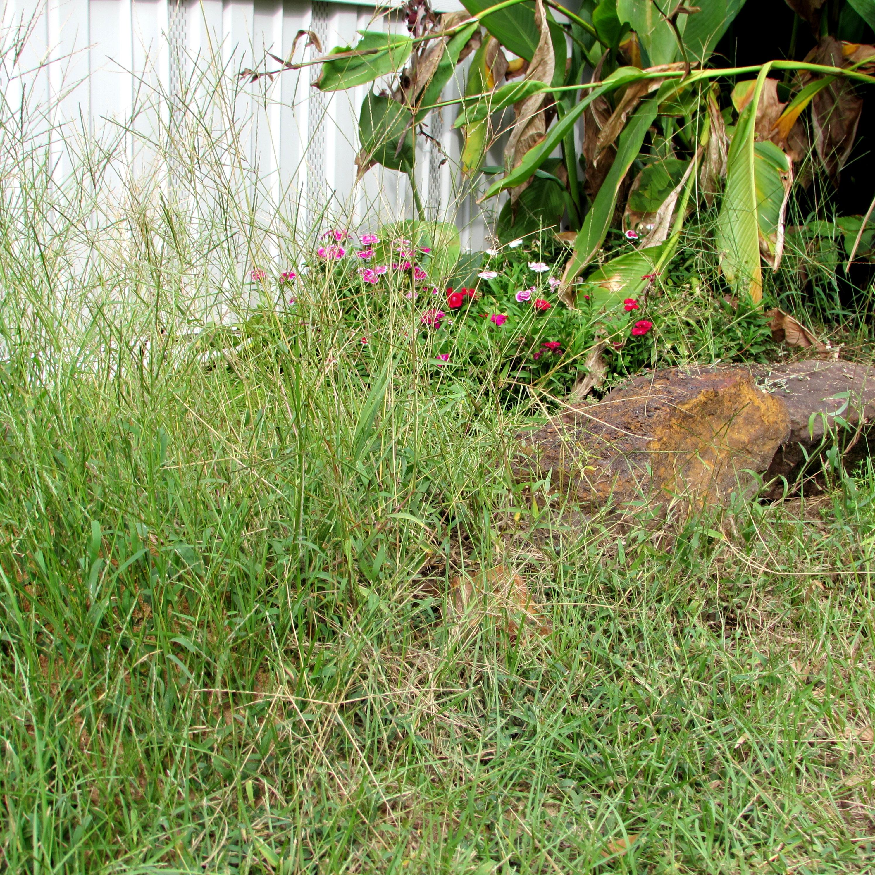 Weeds flower beds - Weeds