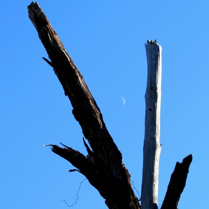 walk tree moon
