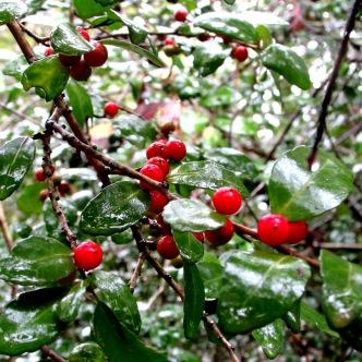 walk berries