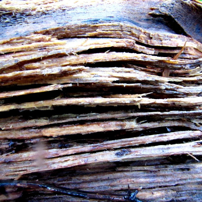 walk wood