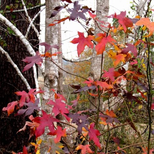 walk leaf