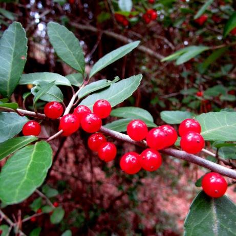 Pretty berries.