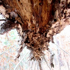 A rotting tree limb I was under, probably not the safest place to be.