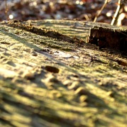 walk log