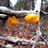 wakl fungi