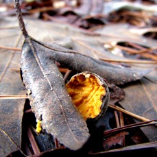 cabin acorn
