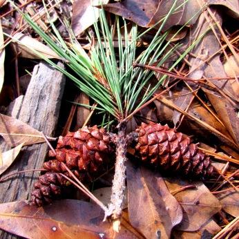 cabin pinecone