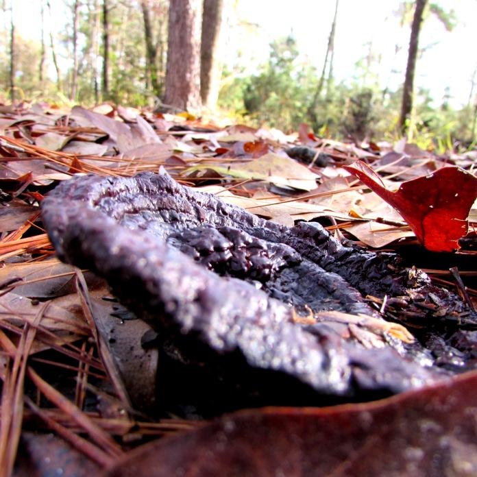 cabin mushroom