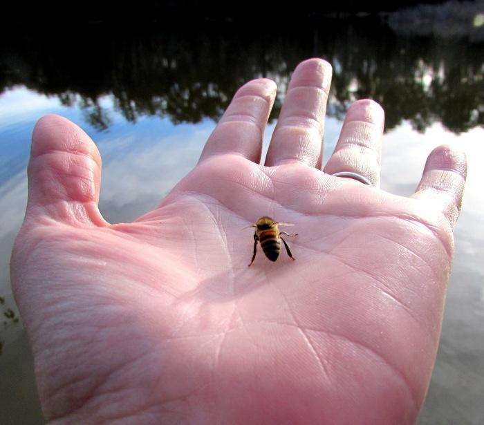 cabin bee
