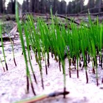 walk grass