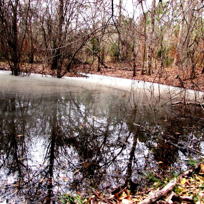 walk pond