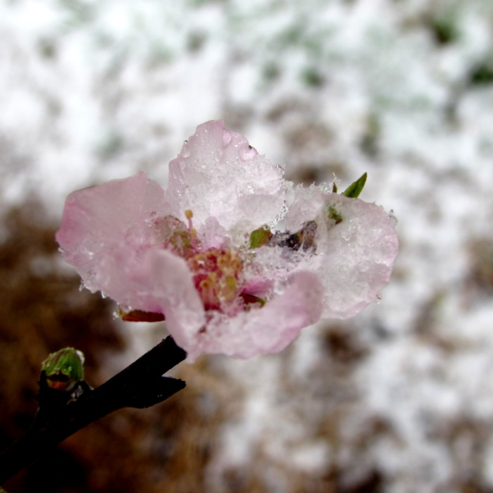walk flower snow