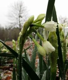 walk snow flower
