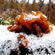 walk fungi snow
