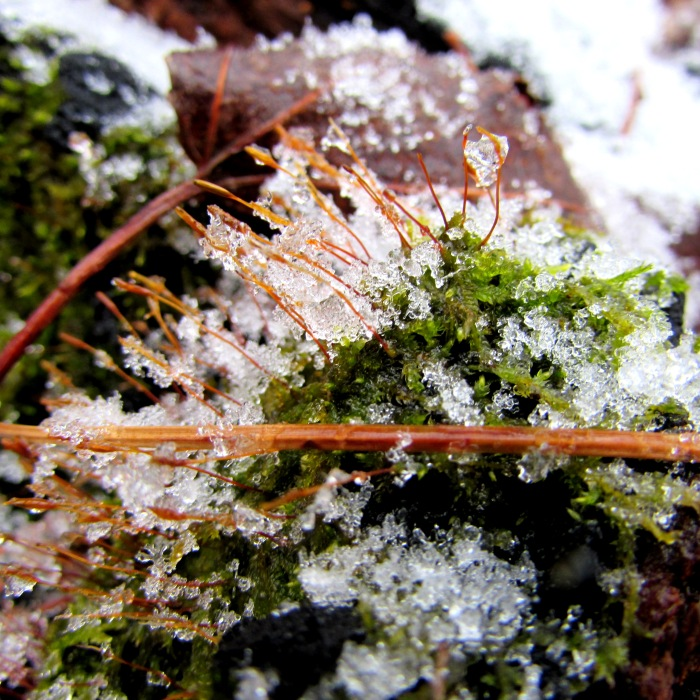 walk moss snow