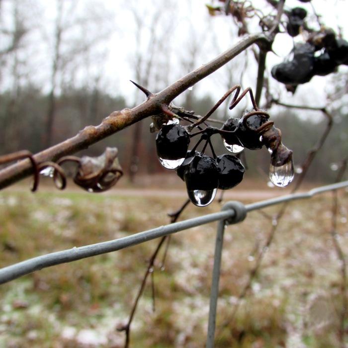 walk berry snow