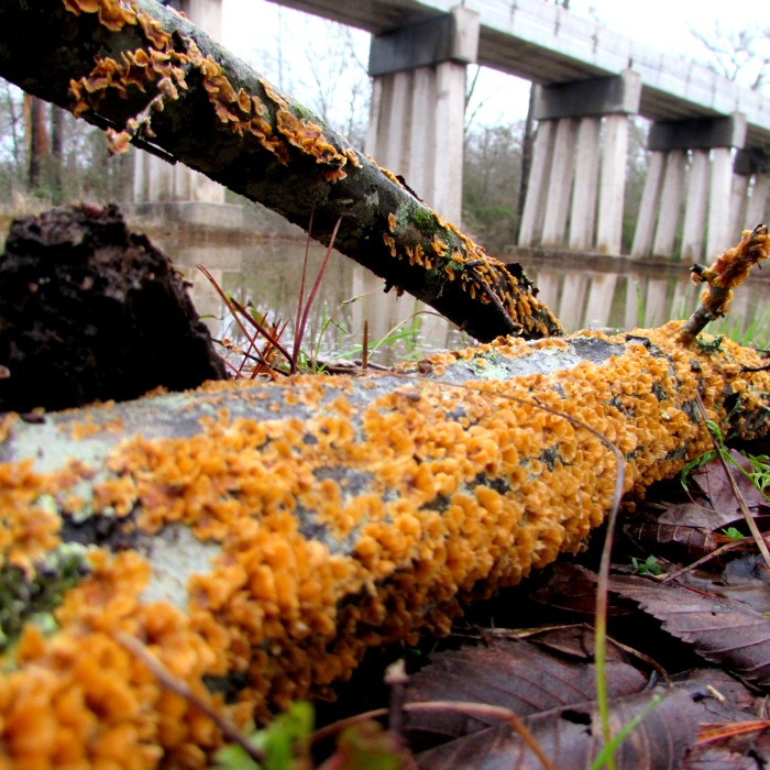 walk train fungi