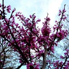 tree flower walk