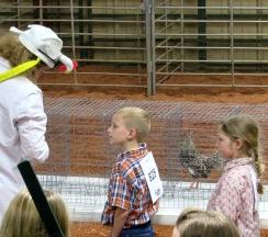 show chicken addie