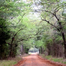 walk road